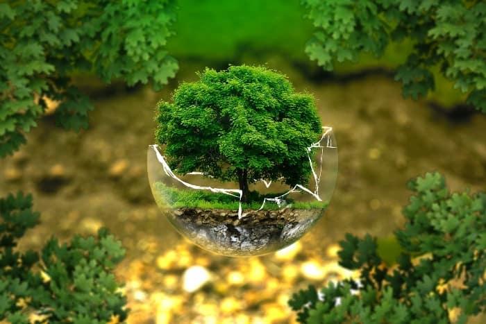 10 actions vertes pour la transition écologique