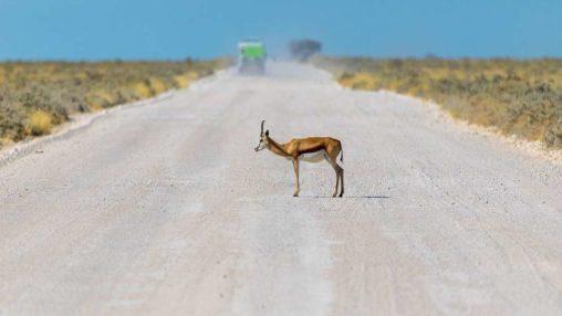 Antilope en Réplique Démocratique du Congo, où est située la future mine de AVZ Minerals