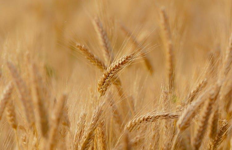Certains ETF matières premières ne répliquent pas les produits agricoles.