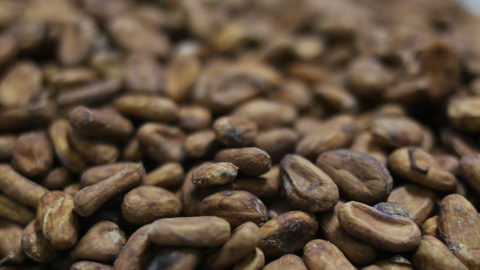 Des fèves de cacao